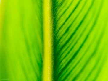 Abstract blurry green leaf surface close-up