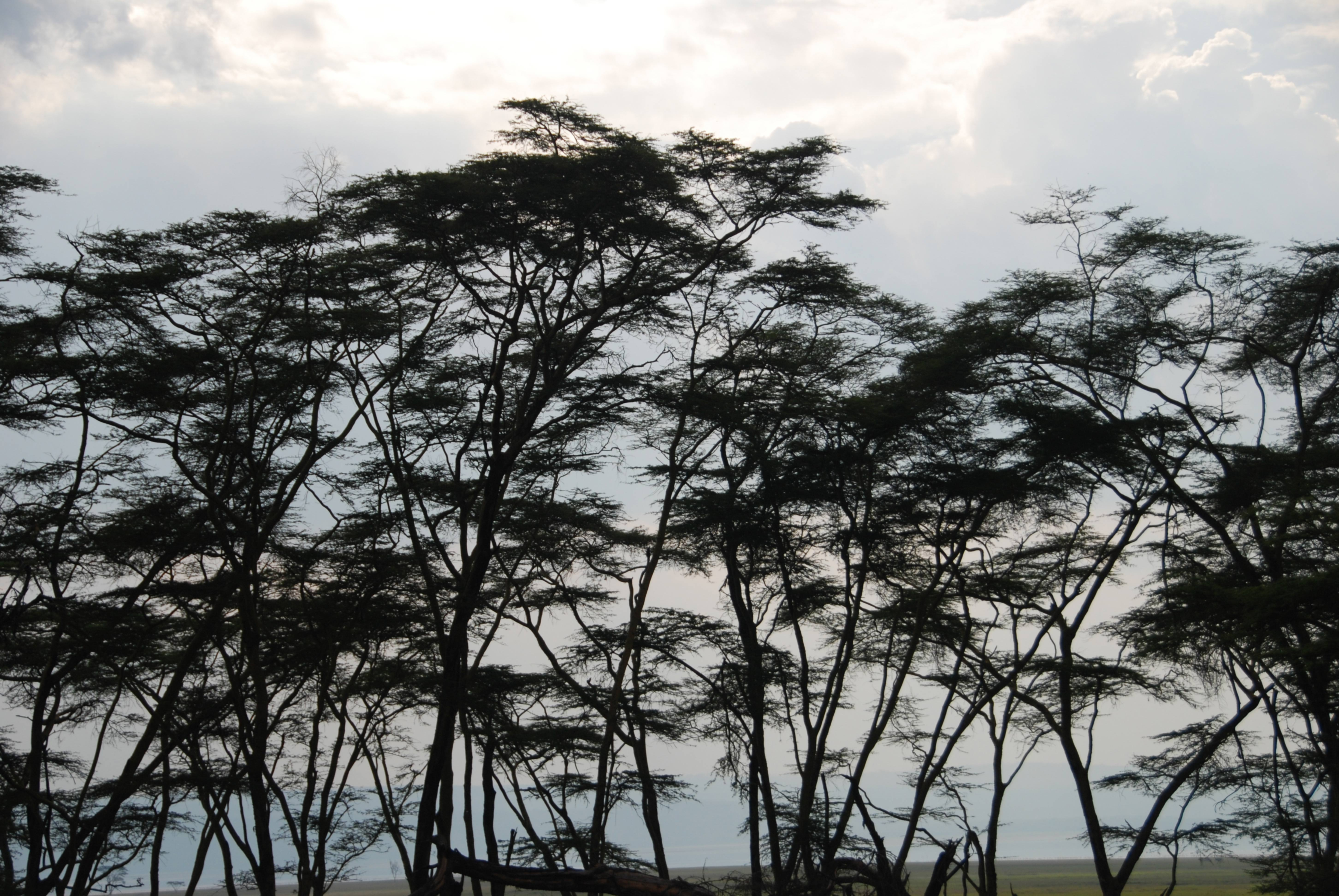 African Treeline