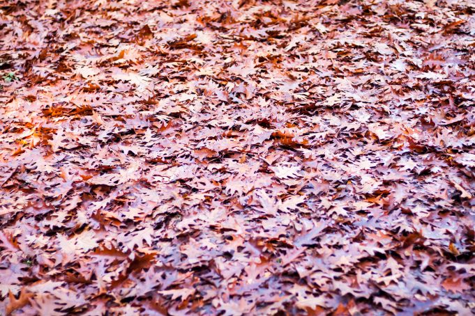 Autum leaves covered ground