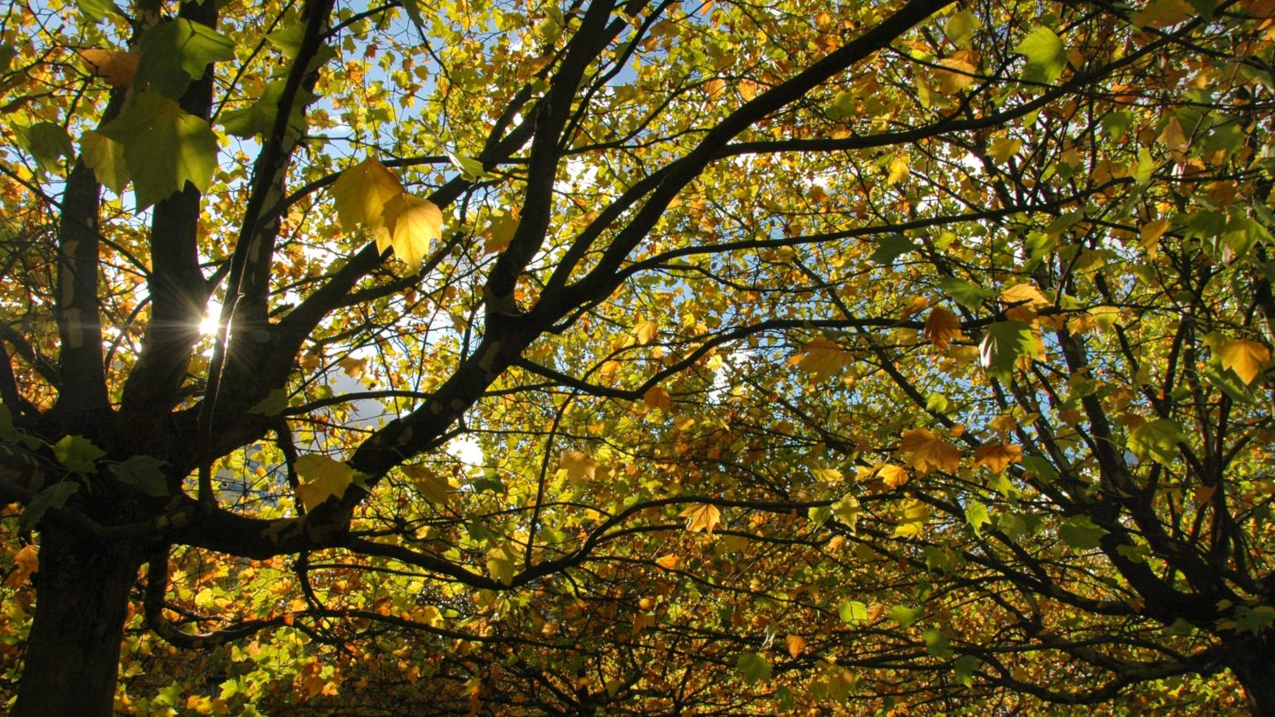 Autumn Sunlight Shining Through the Trees and Leafs