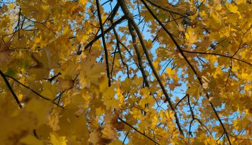 Autumn Tree Leaves-background