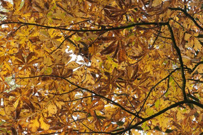 Autumn Tree Leaves