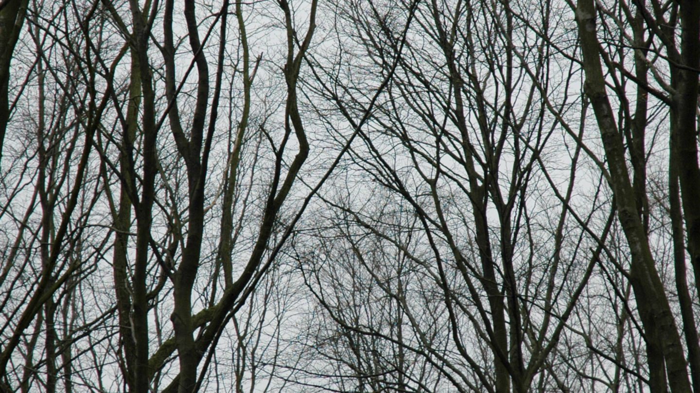 Bare Thin Trees in Black and White