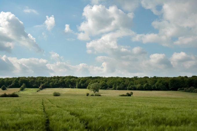 Beautiful blue sky on green treeline landscape