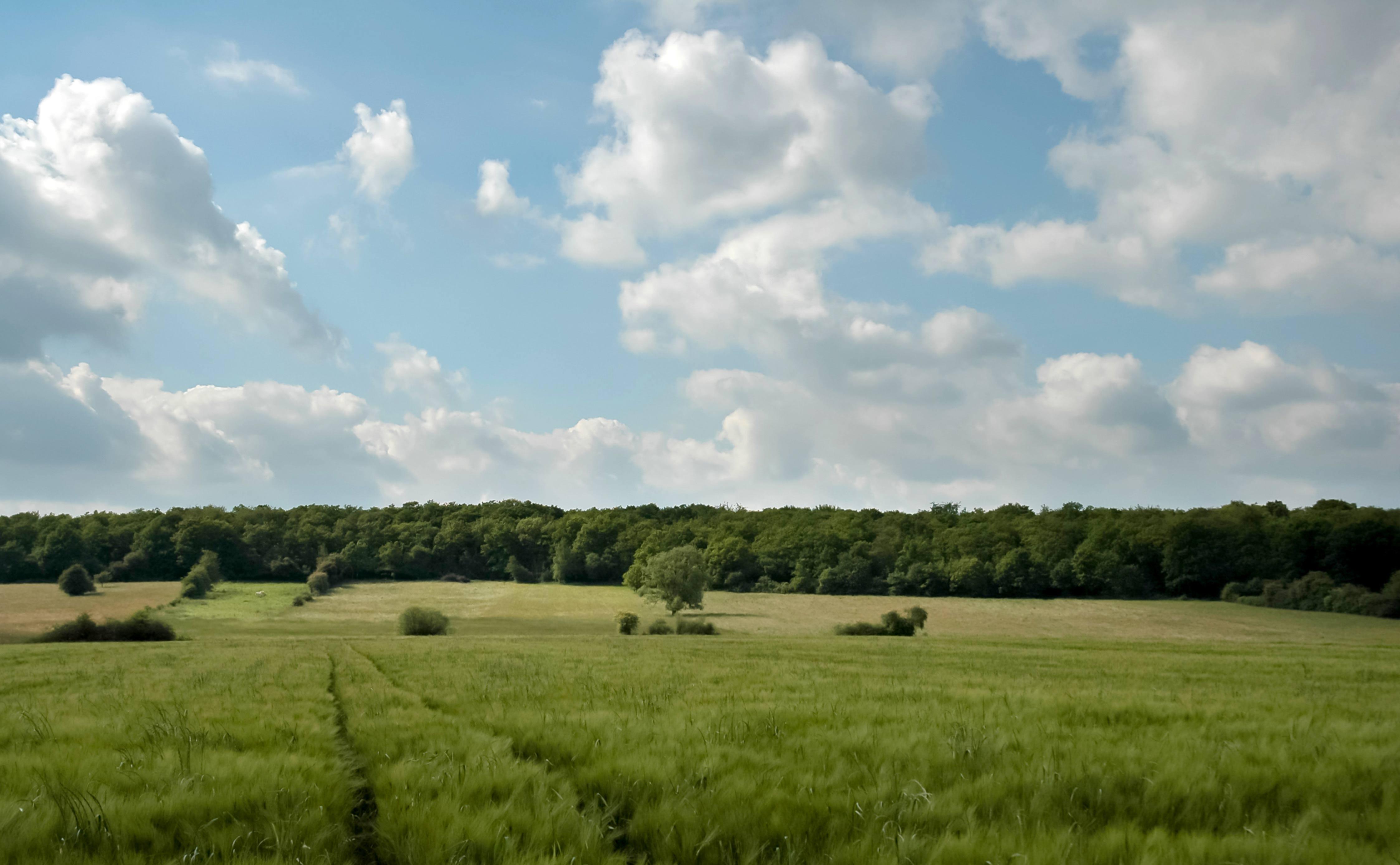 Beautiful blue sky on greenltreeline landscape