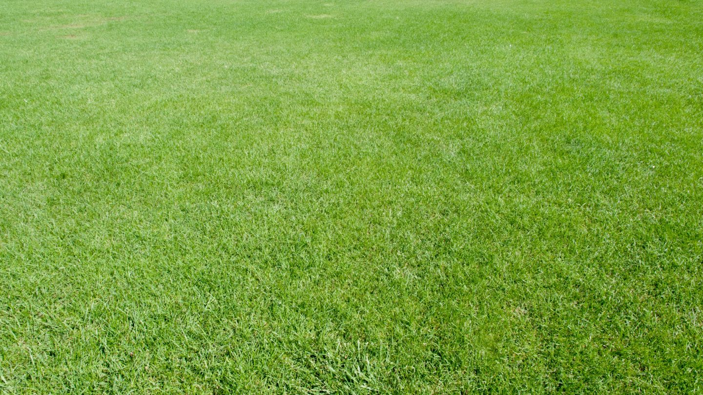 Beautiful green Lawn viewed from human perspective