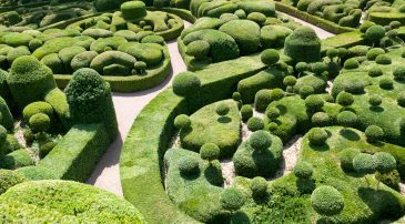 Beautifully arranged buxus garden