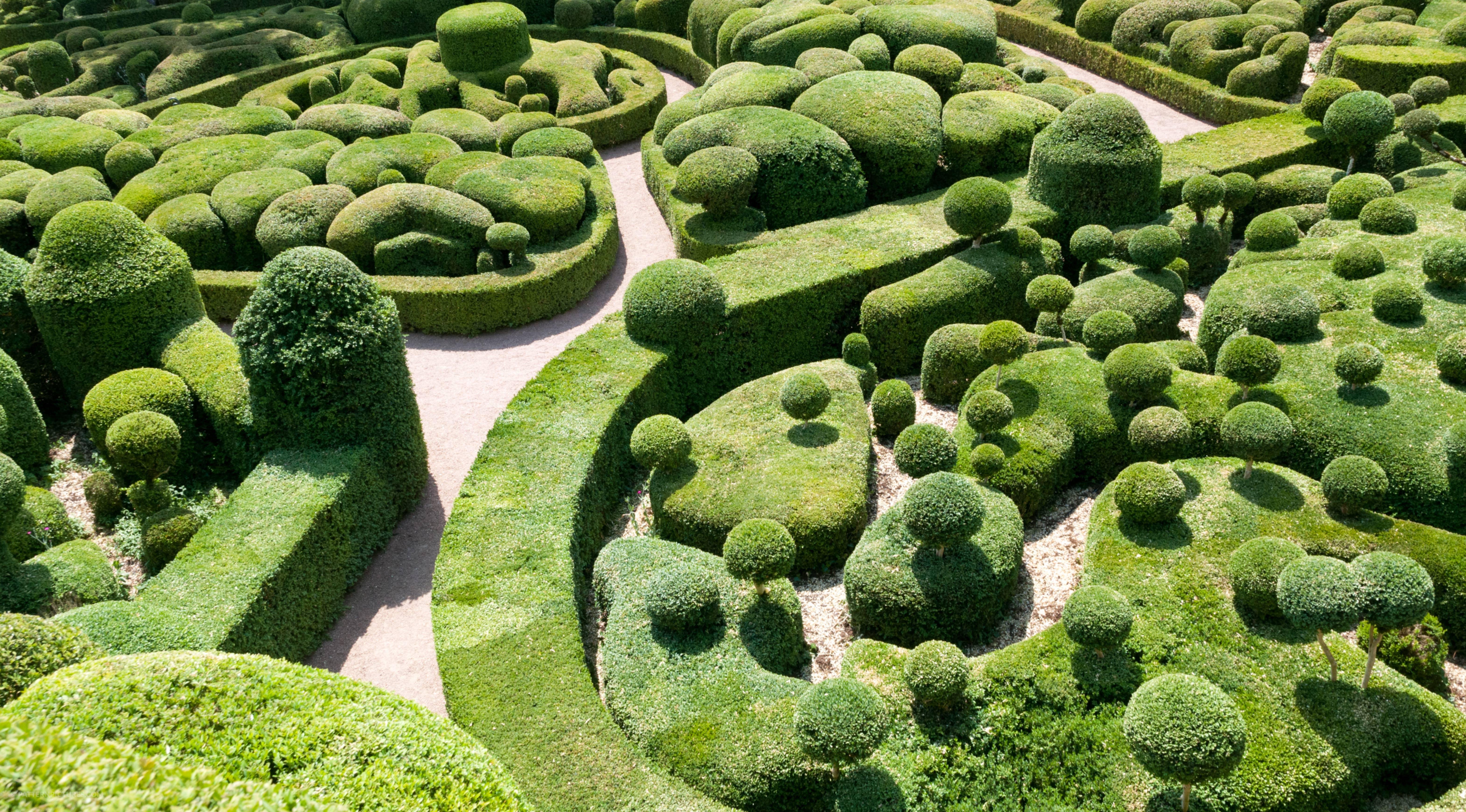 Beautifully arranged buxus garden