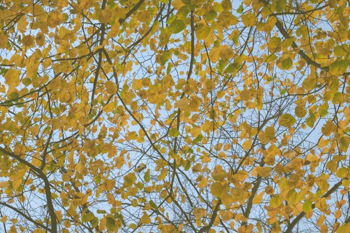 Beech Tree Leaves Sky View