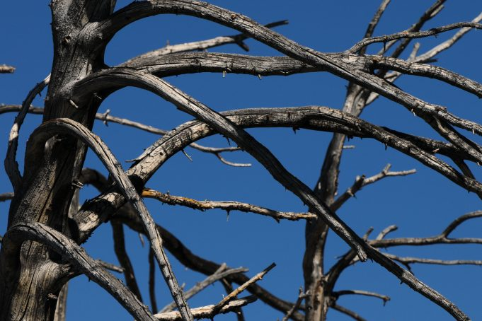 Bended tree branches