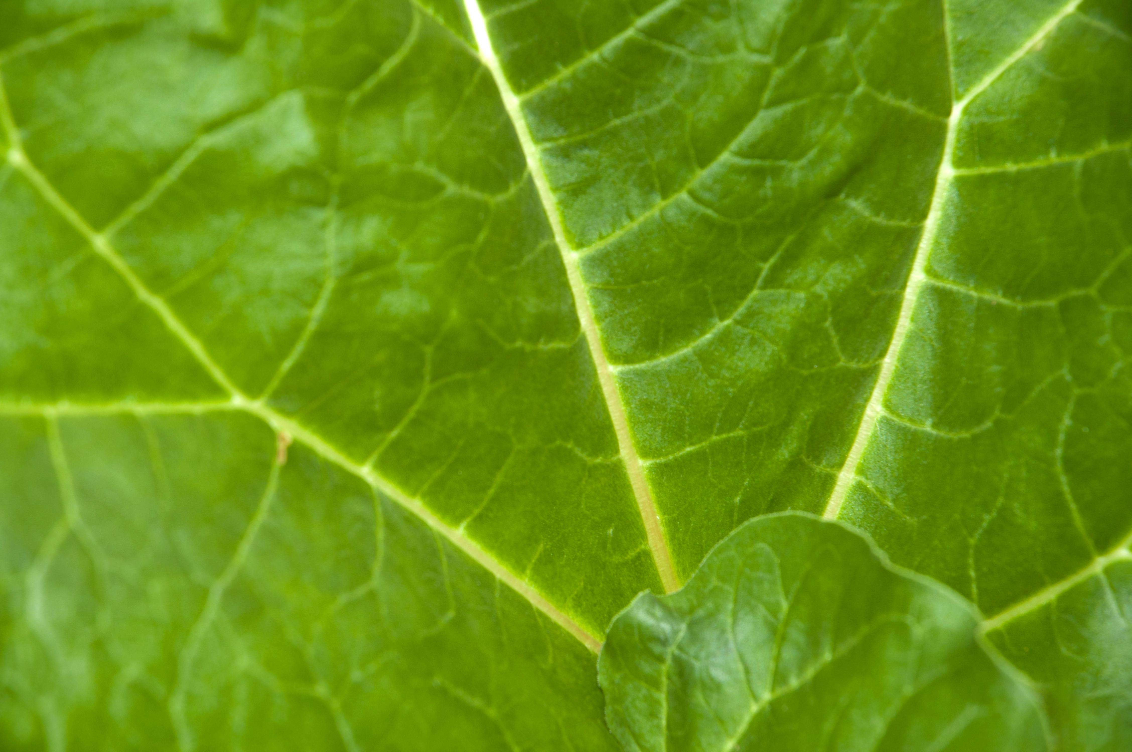 Big Green Leaf Background
