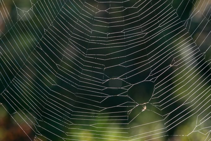 Big Spider Web