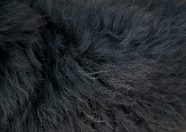 Black sheep fur texture
