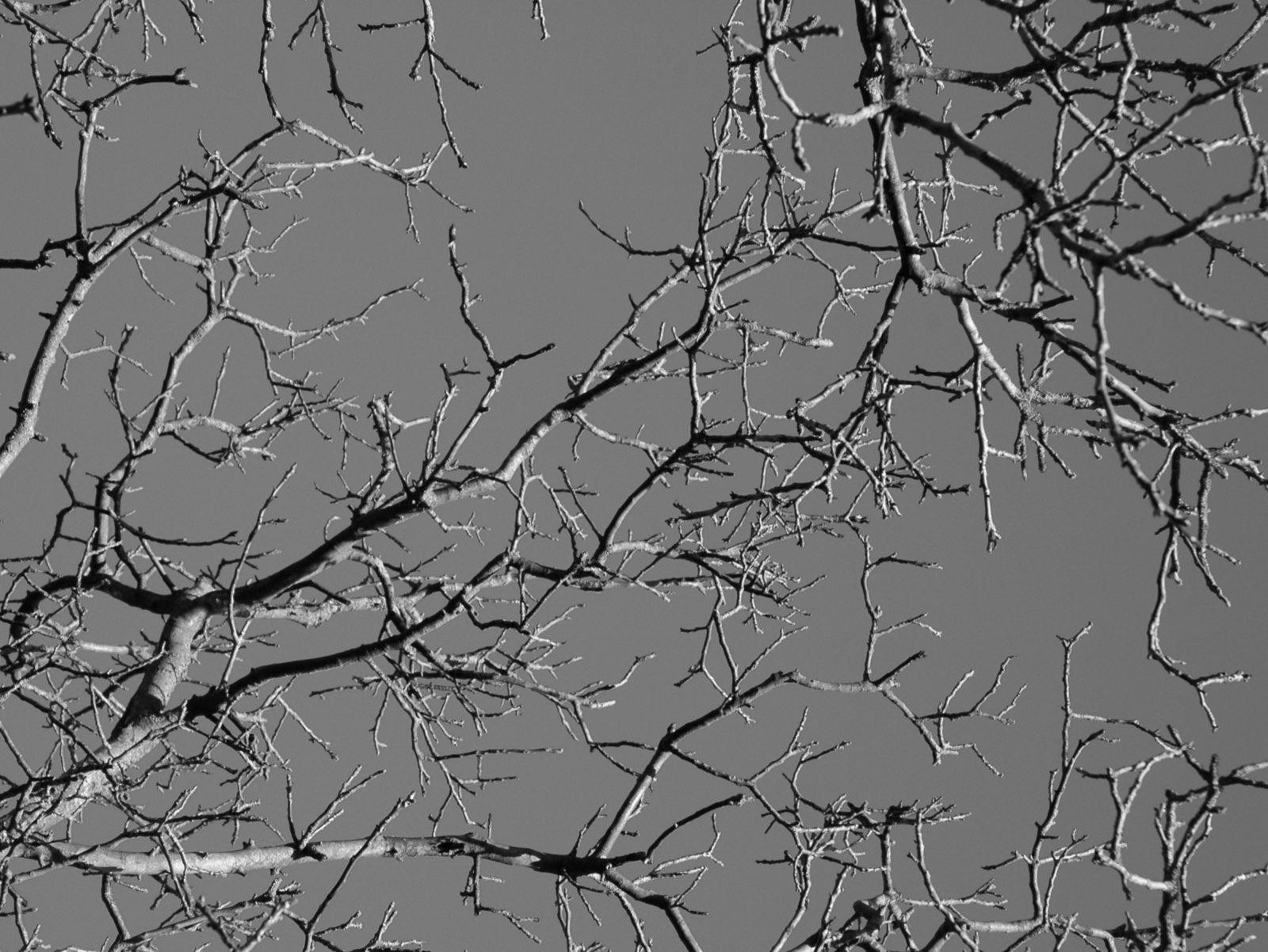 black and white overhanging tree branches