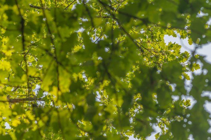Blur leaves tree texture