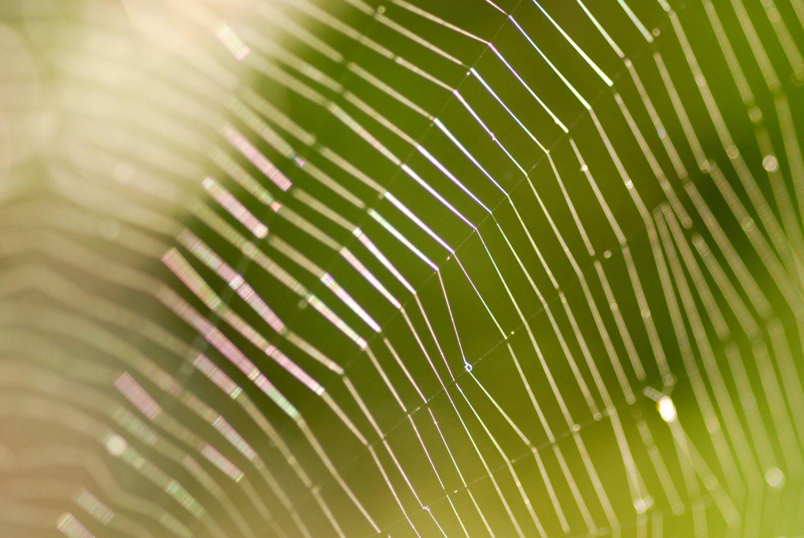 Blurry Spider Web Pattern