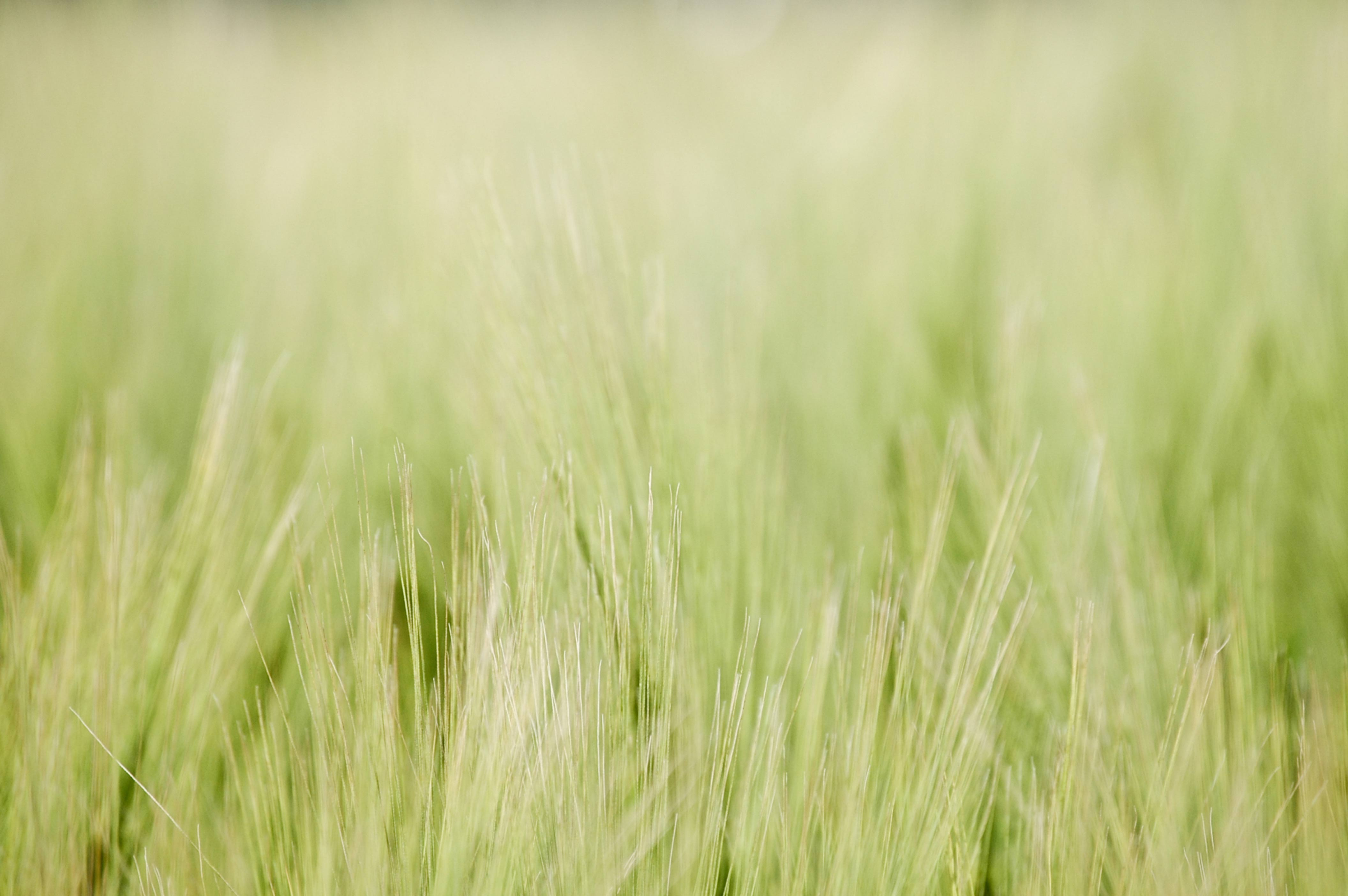 Blurry green weed grass