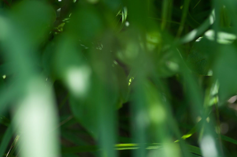 Bokeh green leafs background