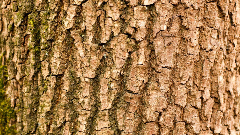 Branch tree bark texture