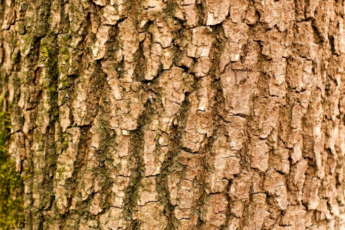 Branch tree bark texture