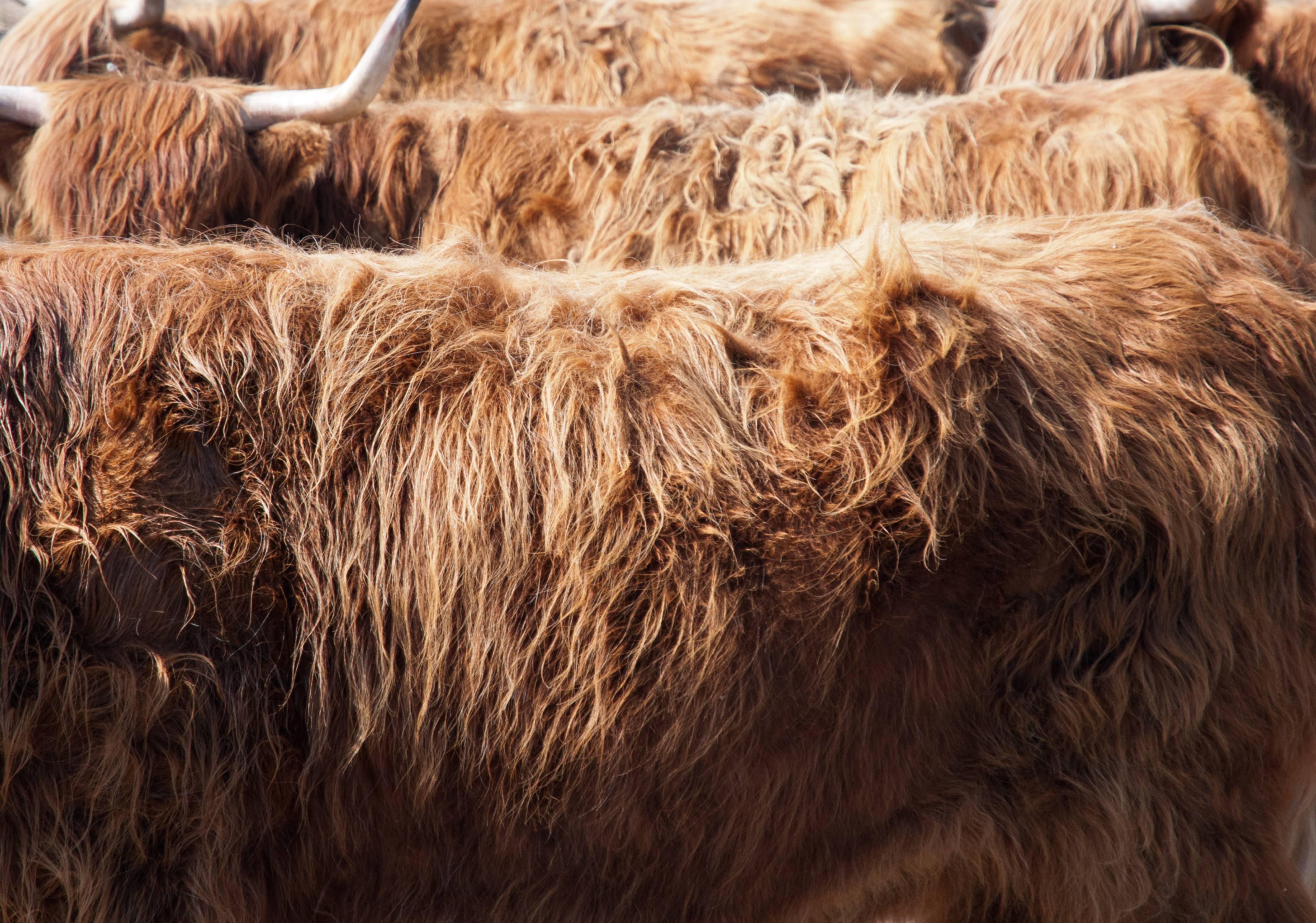 Bull Fur Pattern background