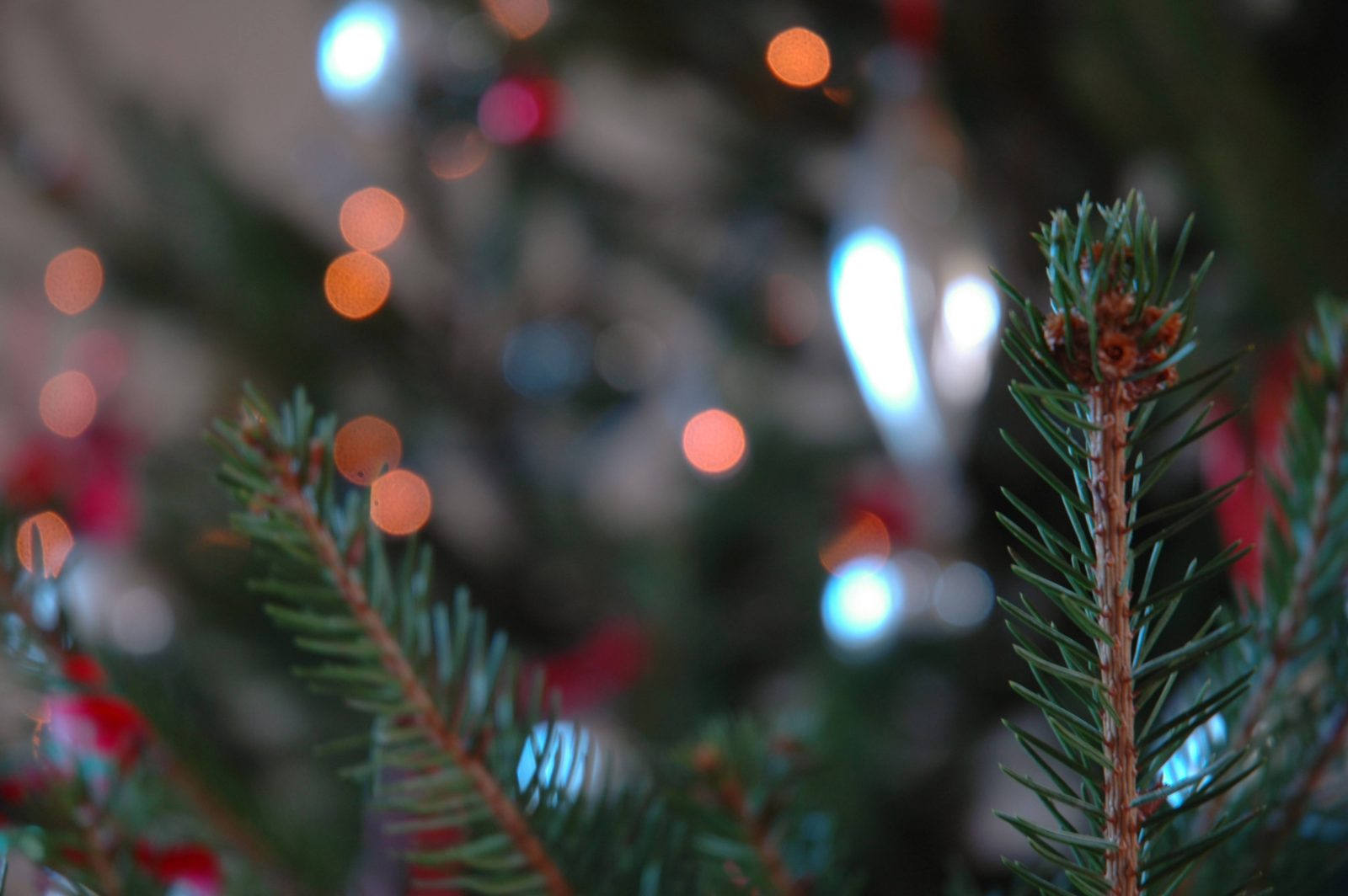 Christmas tree lights bokeh in the evening