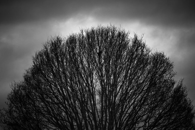 circle shaped tree top branches on a dramatic dark sky