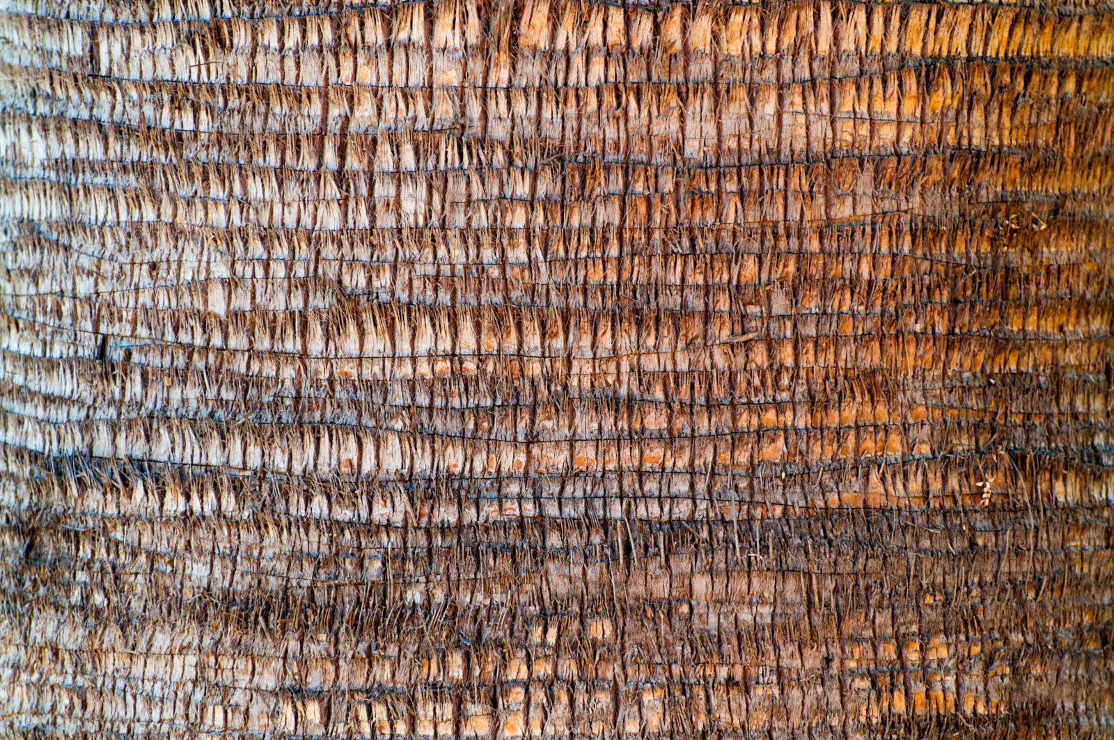 Coconut Tree Trunk Free Photo Texture