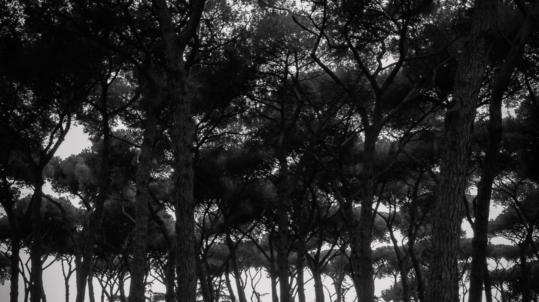 Dark Forrest black and white subtle vignetting