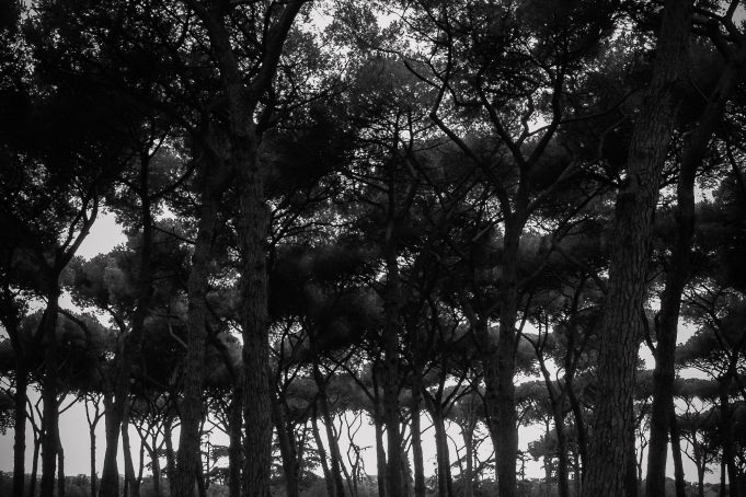 Dark Forrest black and white subtle vignetting