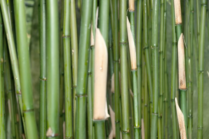 Dark green bamboo tree pattern