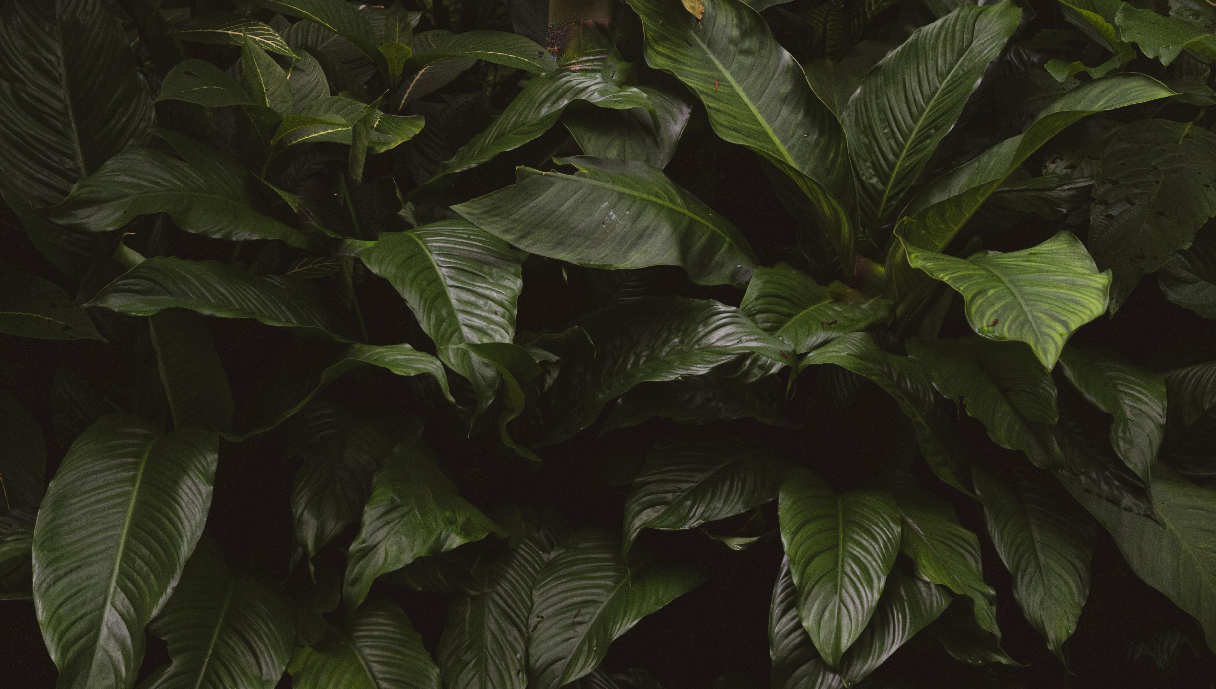 Dark jungle leaves tropical photo background