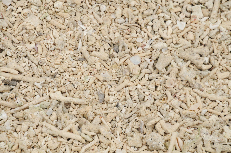 Dead Coral texture