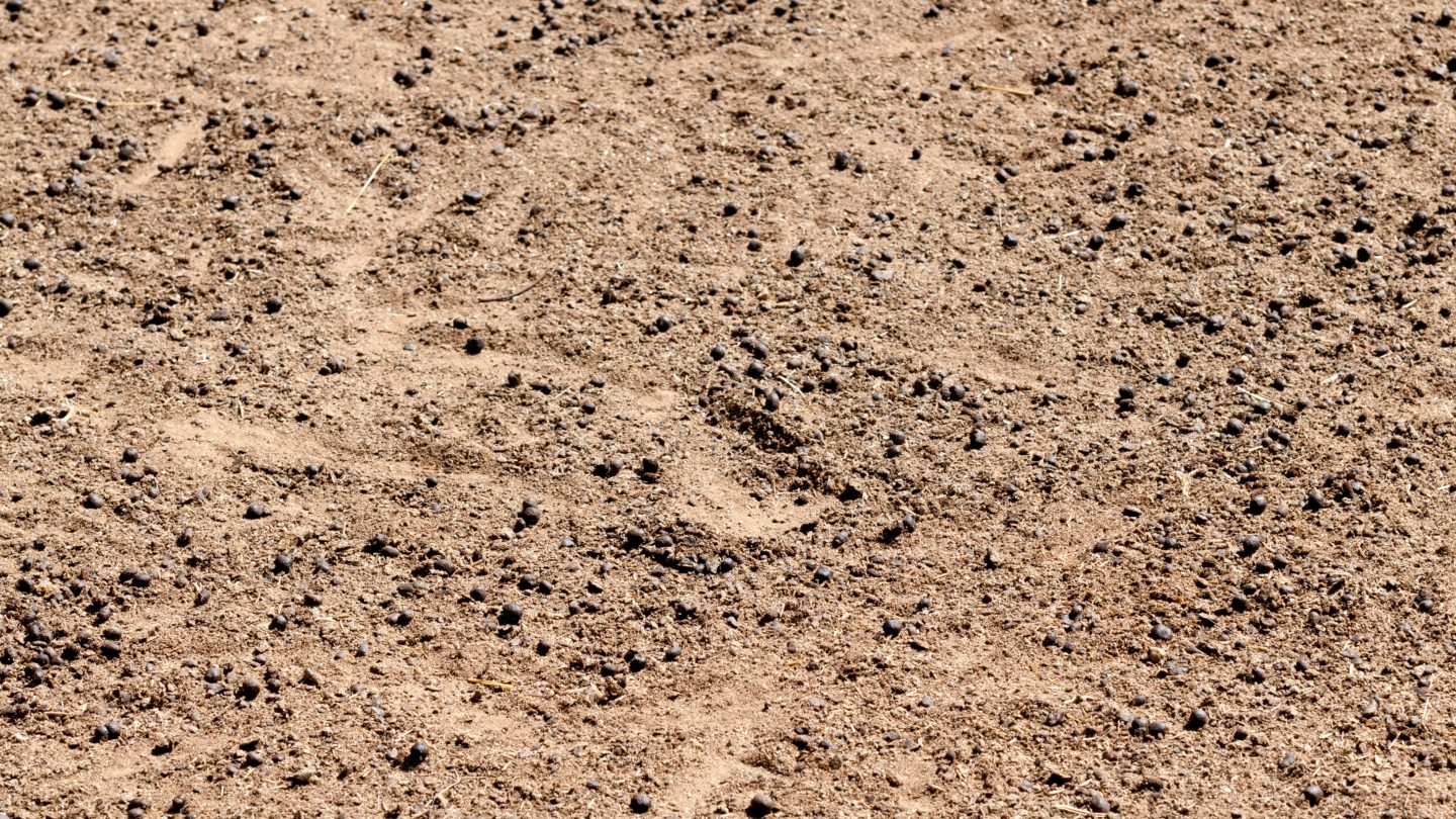 Dirt sand and Goat poop