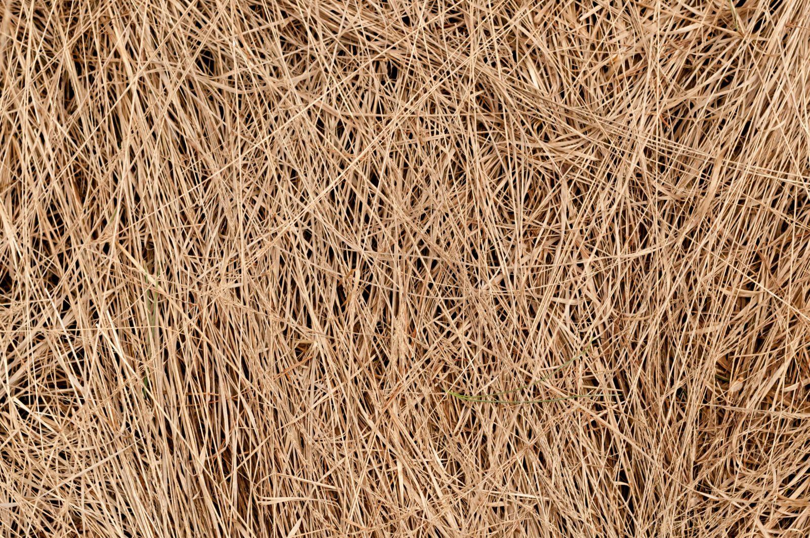 Dried Grass Free Texture