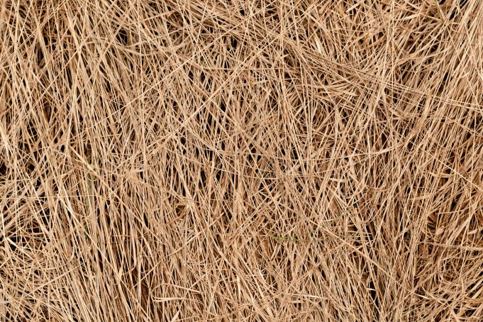 Dried Grass Free Texture
