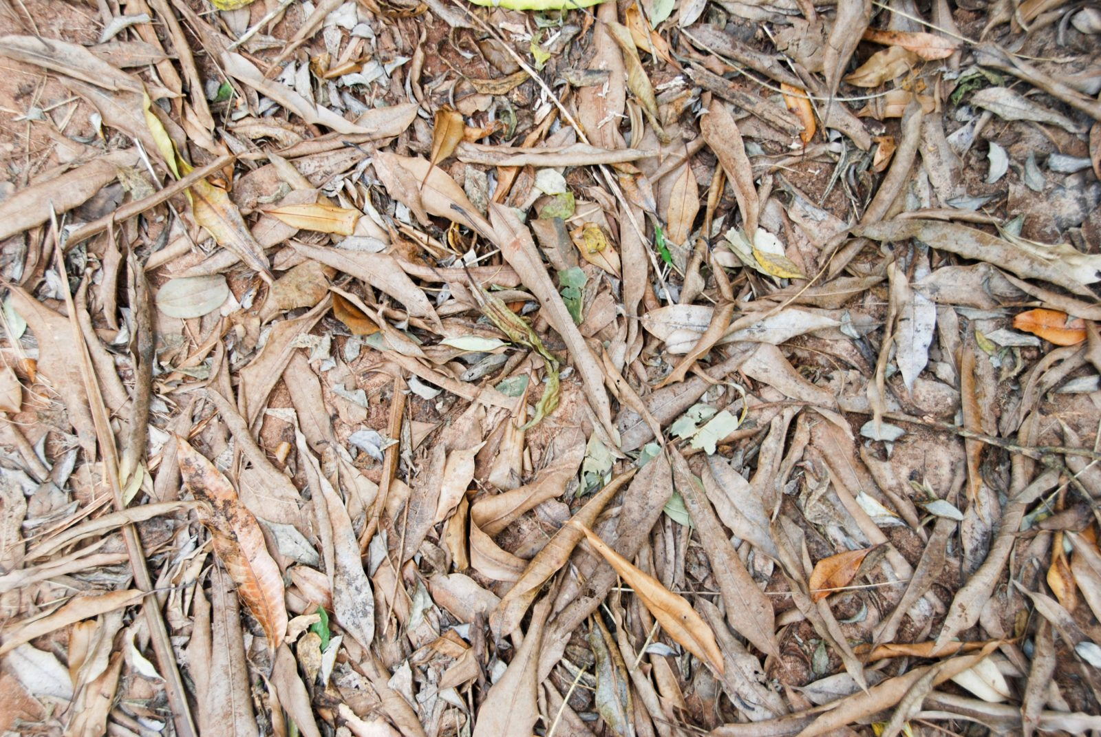 Dried leaves and dirt ground background