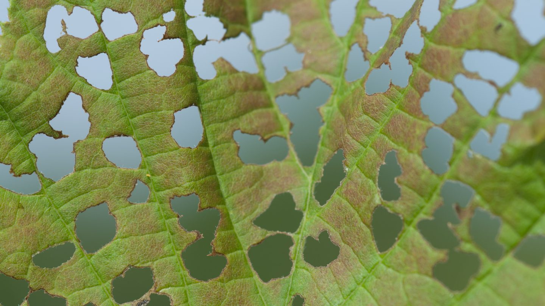 Eaten leaf close-up pattern