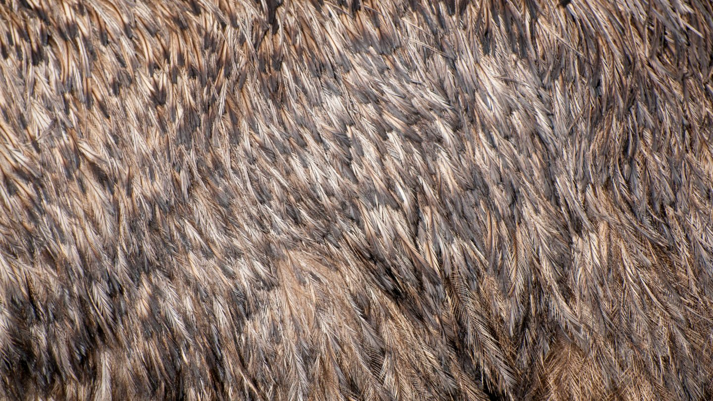 Emur feathers full frame background texture