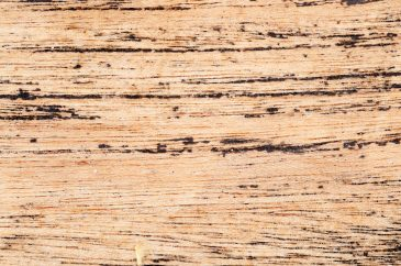 Extreme close-up dirt wood texture
