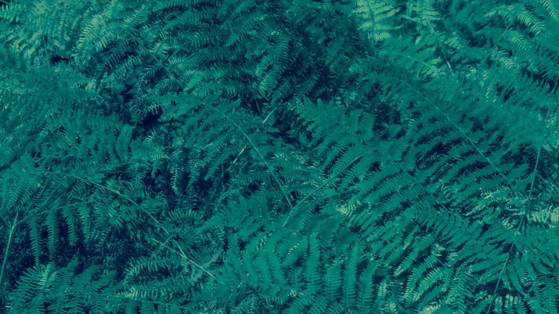 Fern bush background in the dark