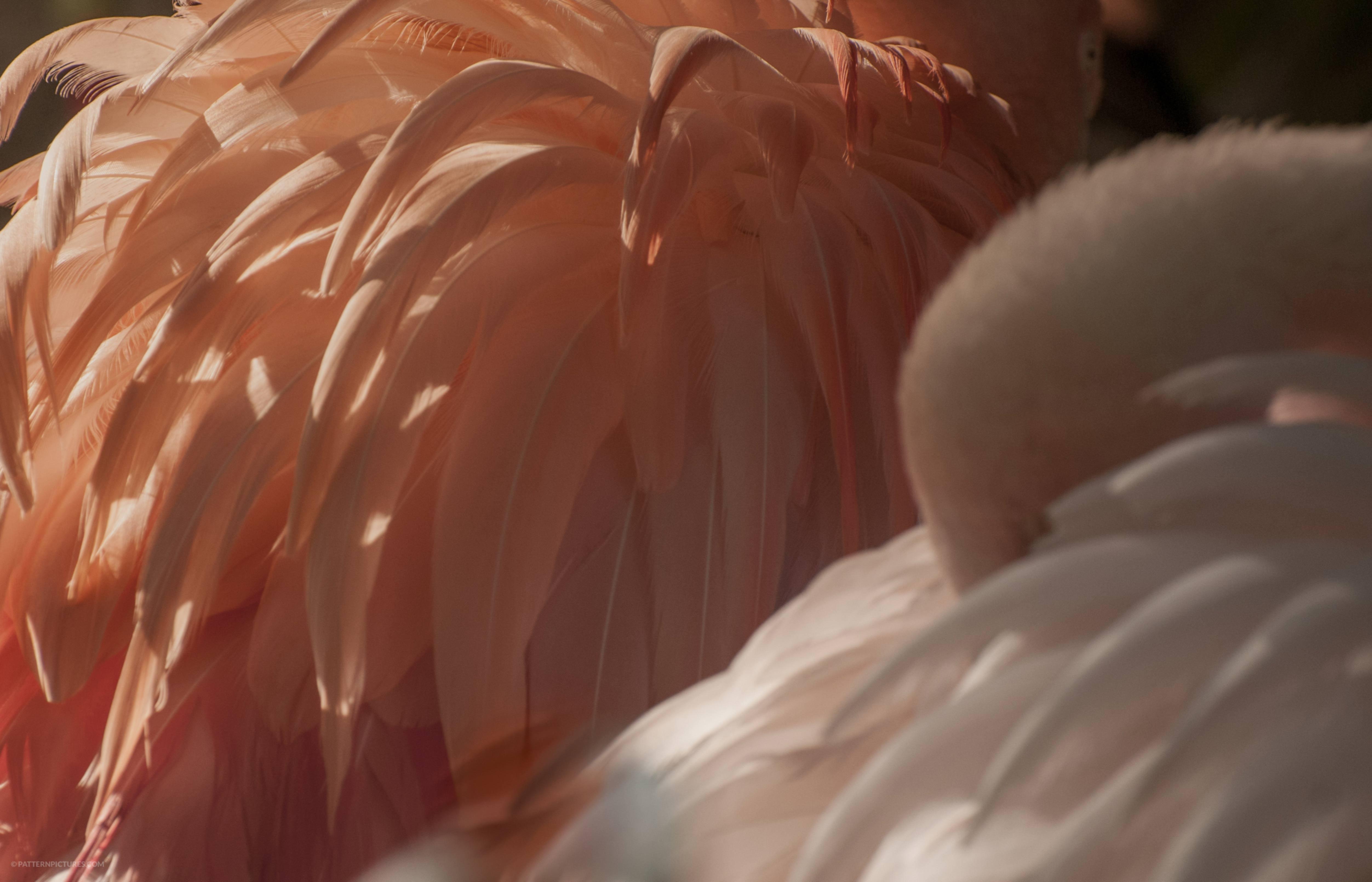 Flamingo hiding
