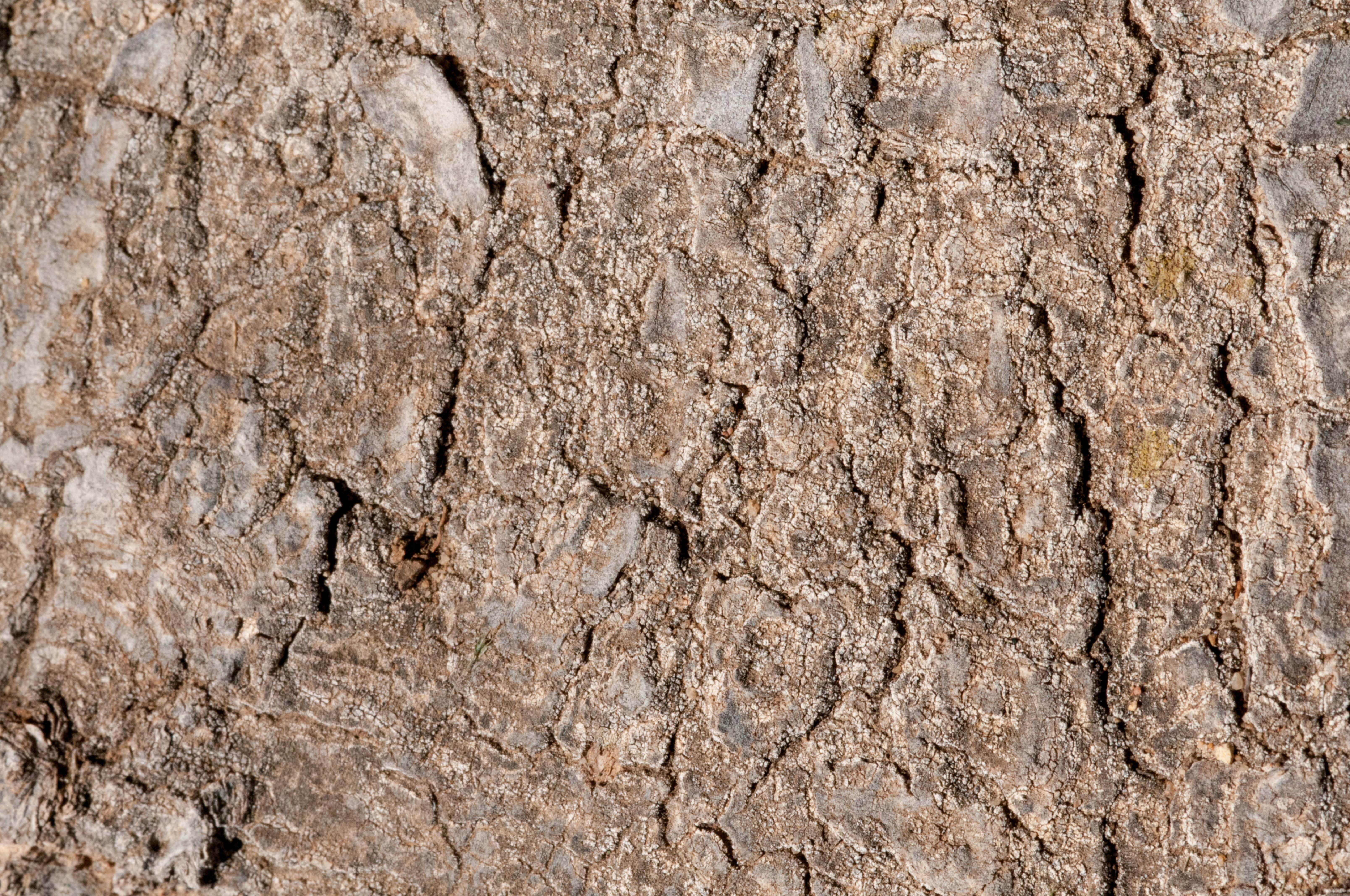 Flat Rocky Surface