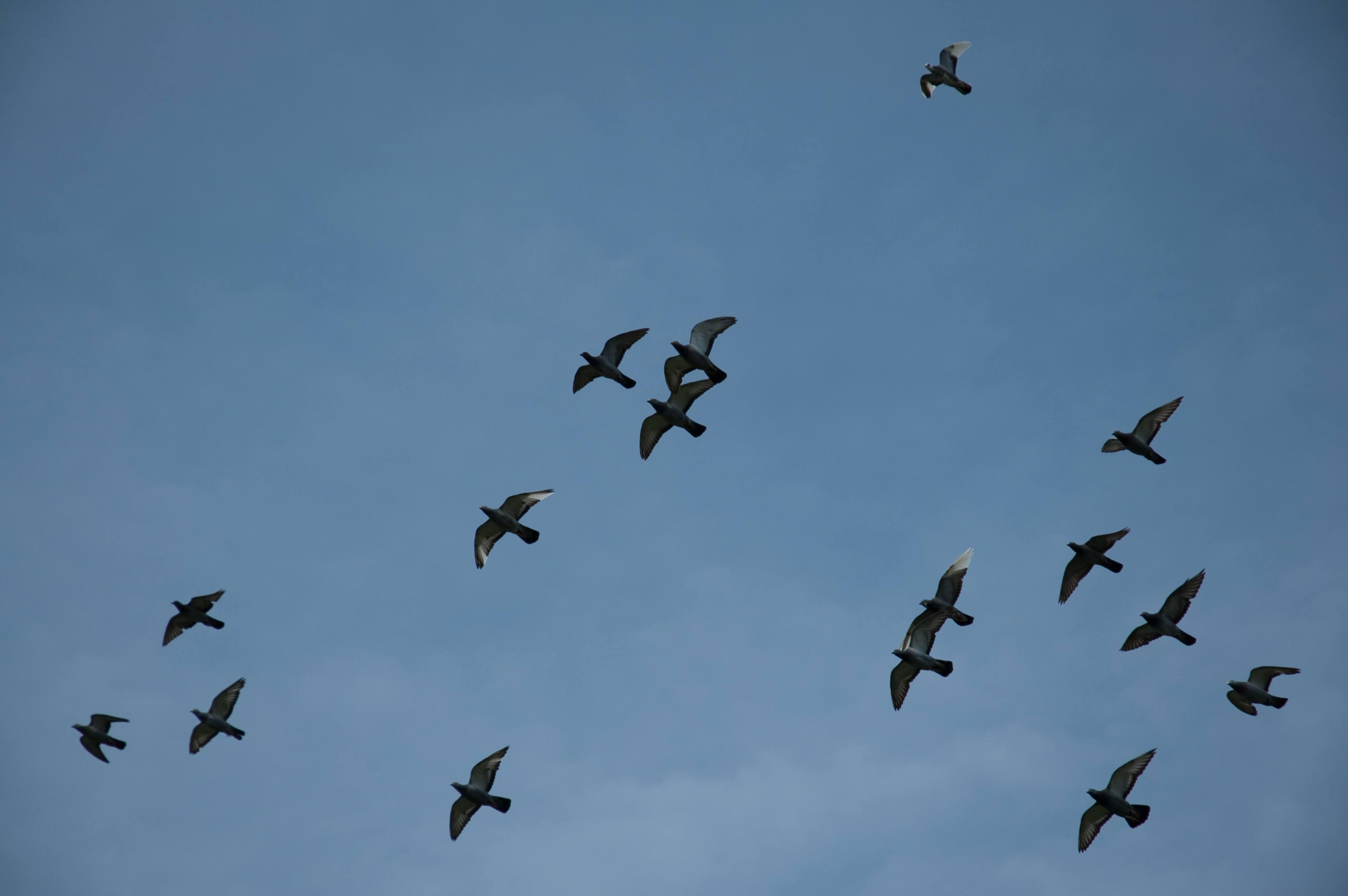 Flock of Birds on a Blue Sky