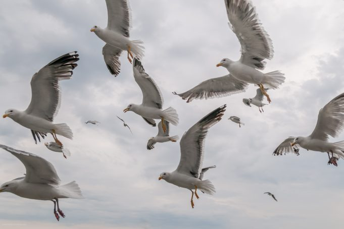 Flying seagulls pattern formation