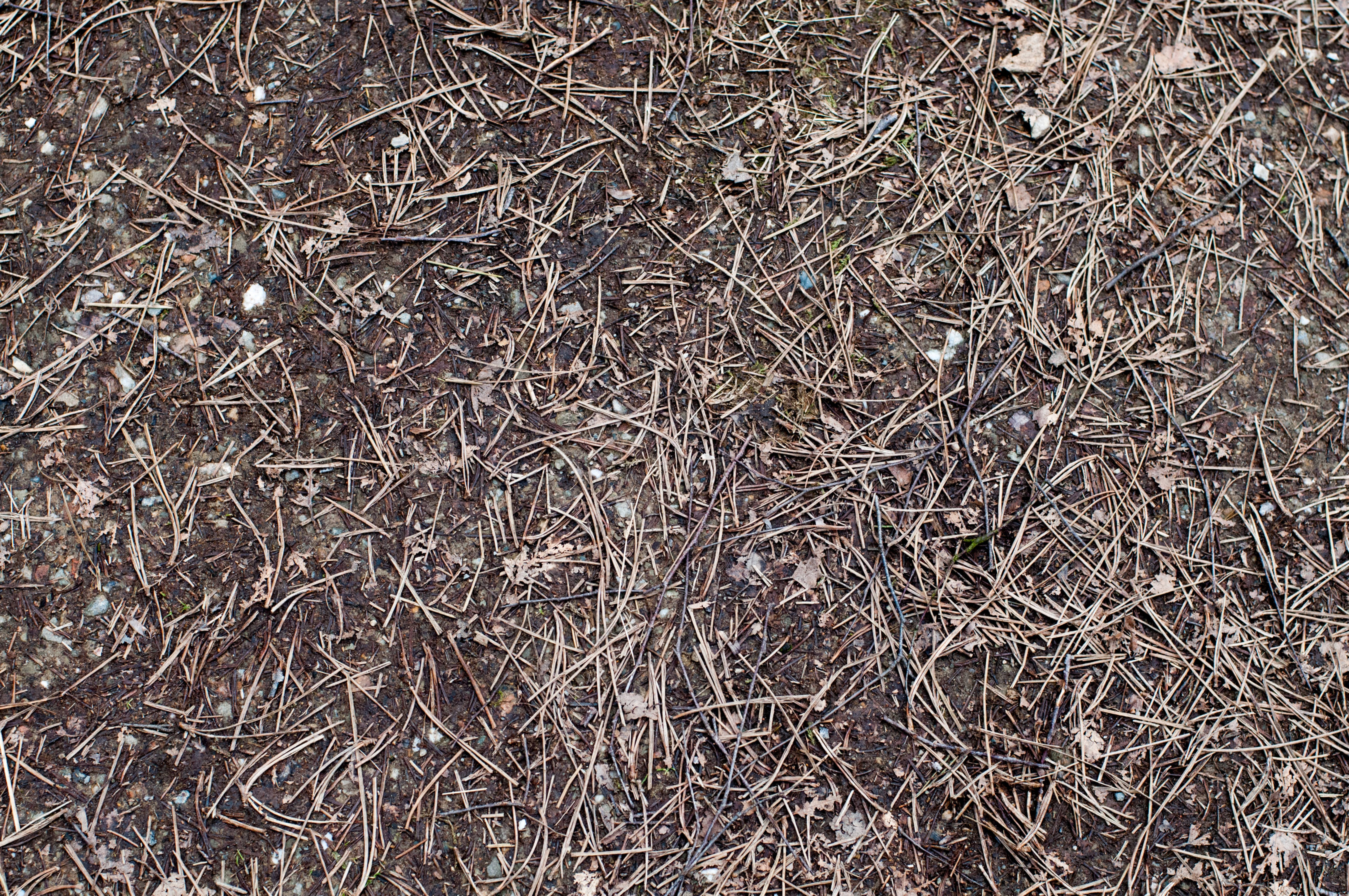 Forest Land Dirt and Pine Needles