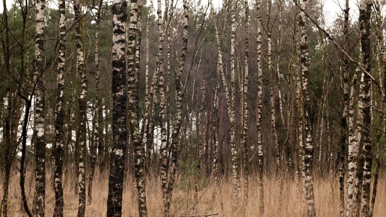 Forrest Tree Barks Pattern