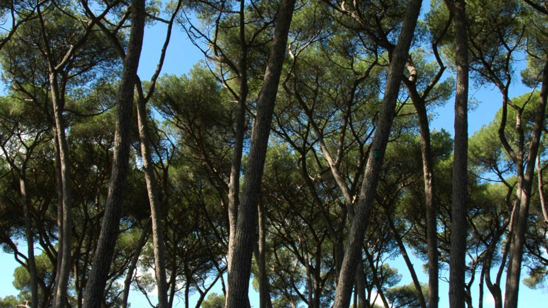 Forrest Villa Borghese gardens