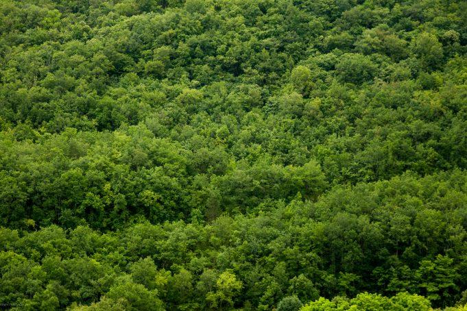 Forrest trees background