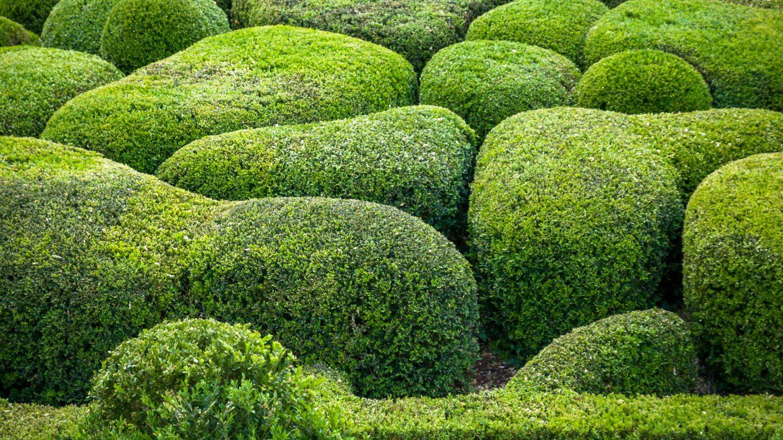 France Marqueyssac Buxus garden texture